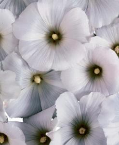 candlecover 86 witte bloemen