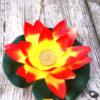 oranje gele lotusbloem of waterlelie
