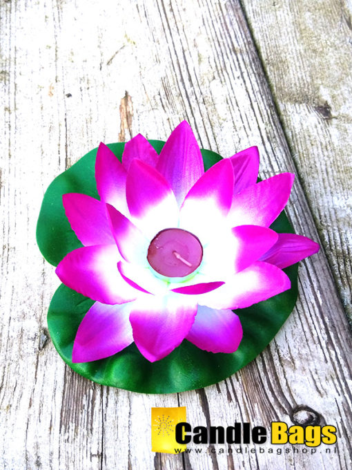 paars witte lotusbloem