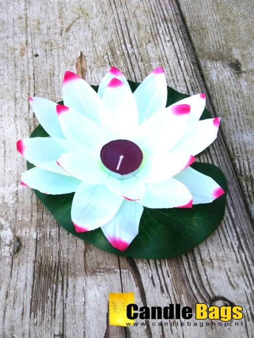 Lotusbloem of waterlelie wit